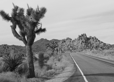 The Road and the Sky 1-Joshua Tree