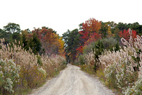 Fall in the pinelands